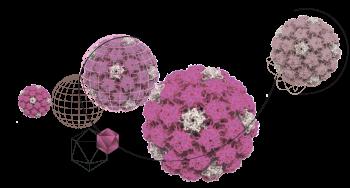 HPV-2
